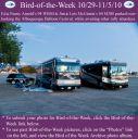 BirdofWeek2B1029102BArnold2B25262BMcGinnis.jpg