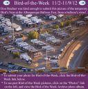 BirdofWeek2B1102122BAlbuquerque2BBalloon2BFest2B10-14-12.jpg