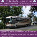 BirdofWeek2B1106092BMcMahan.jpg