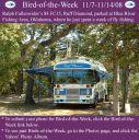 BirdofWeek2B1107082BFullenwider.jpg