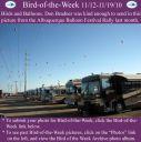 BirdofWeek2B1112102BAlbuquerque.jpg