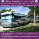BirdofWeek2B1113092BRainbolt.jpg