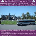 BirdofWeek2B1114082BGideon.jpg