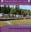 BirdofWeek2B1119102BPNWBB2BRally.jpg