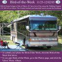 BirdofWeek2B1125052BSchupp.jpg