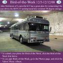BirdofWeek2B1205082BMcGinnis.jpg