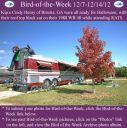 BirdofWeek2B1207122BHenry.jpg
