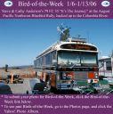 BirdofWeek_010606_Andersons.jpg