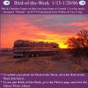BirdofWeek_011306_Corpus.jpg