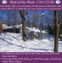 BirdofWeek_011808_Garamella.jpg