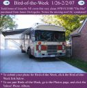 BirdofWeek_012607_Todd_Jones.jpg