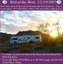 BirdofWeek_020207_Smith.jpg