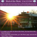 BirdofWeek_021607_Engel.jpg