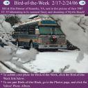 BirdofWeek_021706_Brinner.jpg