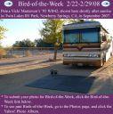 BirdofWeek_022208_Masterson.jpg