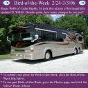 BirdofWeek_022406_Webb.jpg