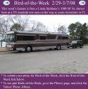 BirdofWeek_022908_Spithaler.jpg