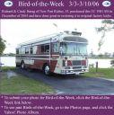 BirdofWeek_030306_Barag.jpg
