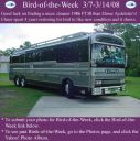 BirdofWeek_030708_Aydelotte.jpg