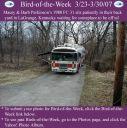 BirdofWeek_032307_Perkinson.jpg