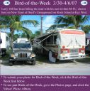 BirdofWeek_033007_Dill.jpg