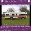 BirdofWeek_040706_Hannink.jpg