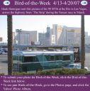 BirdofWeek_041307_Hannigan.jpg
