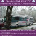 BirdofWeek_042007_Jensen.jpg