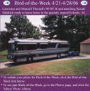 BirdofWeek_042106_Thornell.jpg