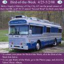 BirdofWeek_042508_Maloney.jpg