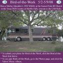 BirdofWeek_050208_Marabito.jpg