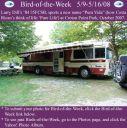 BirdofWeek_050908_Dill.jpg