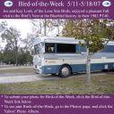 BirdofWeek_051107_Losh.jpg