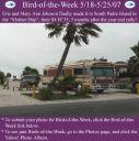BirdofWeek_051807_Johnson.jpg