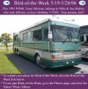 BirdofWeek_051906_Bulriss.jpg
