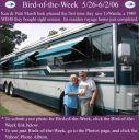 BirdofWeek_052606_Marsh.jpg