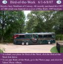 BirdofWeek_060107_Washburn.jpg