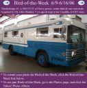 BirdofWeek_060906_Wanderlodge__1.jpg