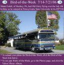 BirdofWeek_071406_Fedeli.jpg