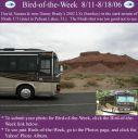 BirdofWeek_081106_Brady.jpg