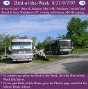 BirdofWeek_083107_May___Washburn.jpg
