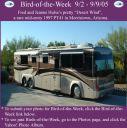 BirdofWeek_090205_Hulse.jpg