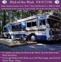 BirdofWeek_090806_Souder.jpg