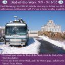 BirdofWeek_090905_Riester.jpg