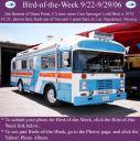 BirdofWeek_092206_Benson.jpg