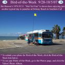 BirdofWeek_092807_Benson.jpg