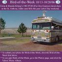 BirdofWeek_101306_Ekberg.jpg