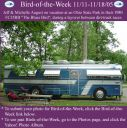 BirdofWeek_111105_August.jpg
