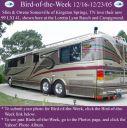 BirdofWeek_121605_Somerville.jpg